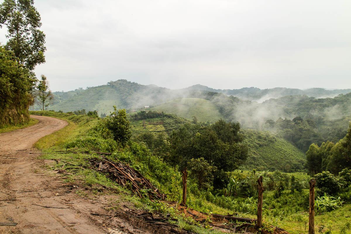 Gorilla Trekking Uganda Ausgangspunkt Bwindi Nationalpark
