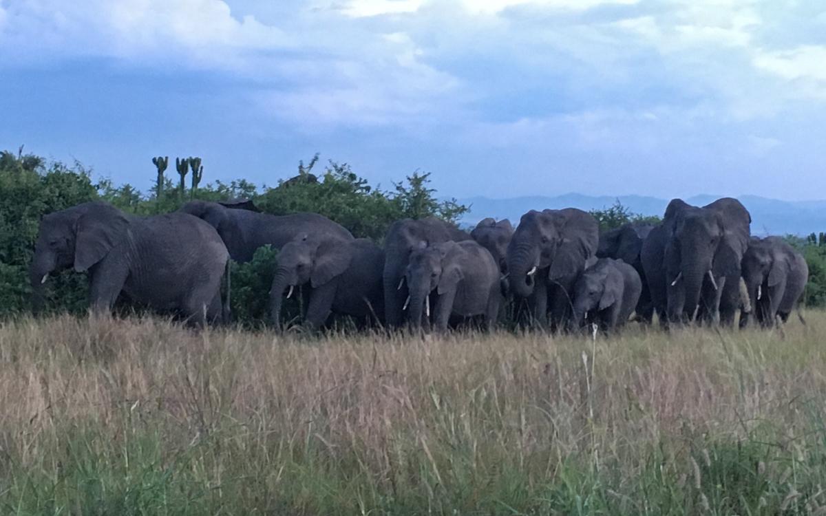 elefanten-game-drive-queen-elizabeth-np