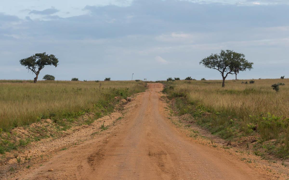 Game Drive im Murchison Falls Nationalpark