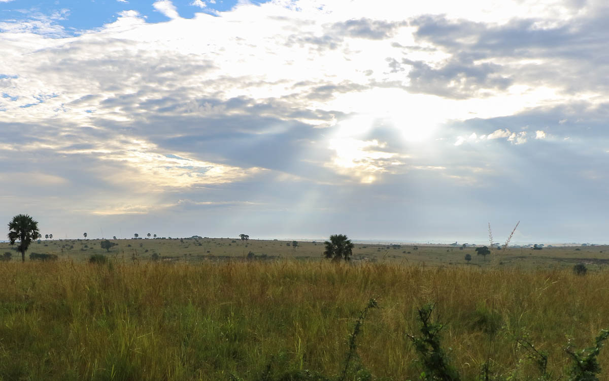 game-drive-murchison-falls-nationalpark-31