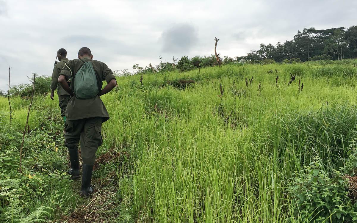 gorilla-trekking-uganda-bwindi-felder