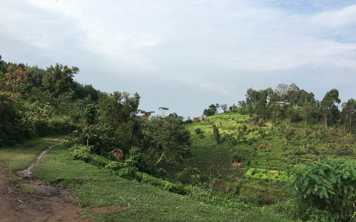 Gorilla Trekking Uganda Mayange Bwindi NP