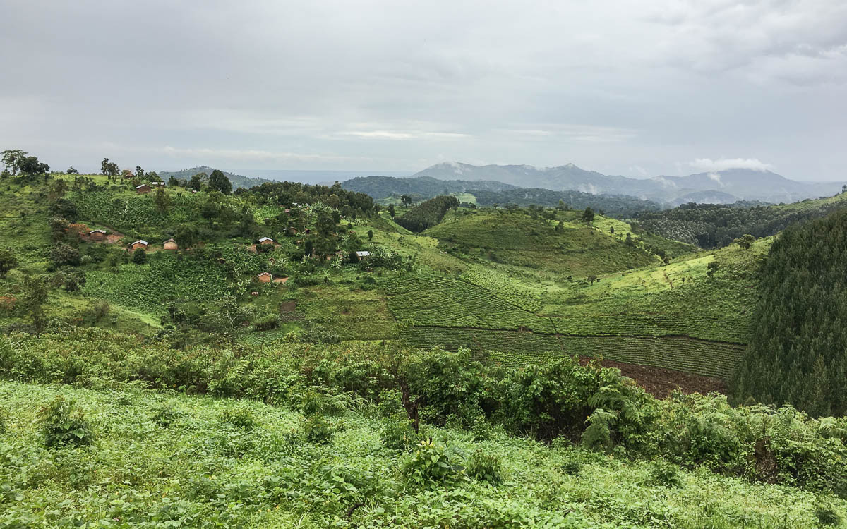 gorilla-trekking-uganda-bwindi-nationalpark-ausblick