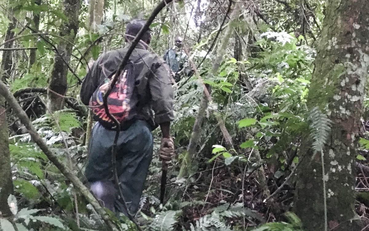 gorilla-trekking-uganda-bwindi-nationalpark-spurenleser