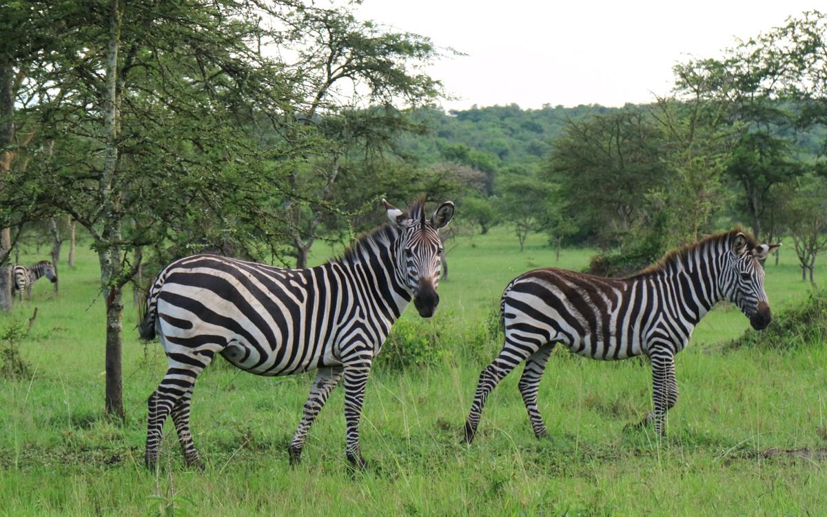 grenze-ruanda-uganda-28