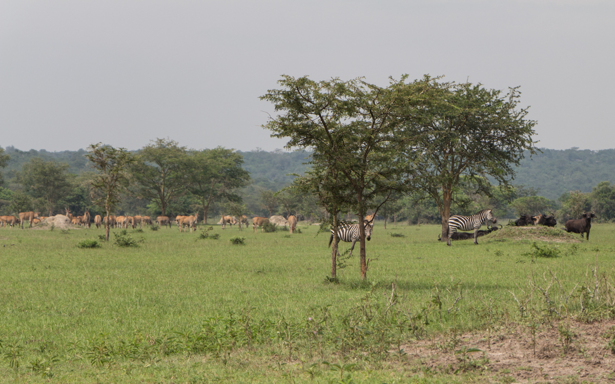 lake-mburo-nach-entebbe-4
