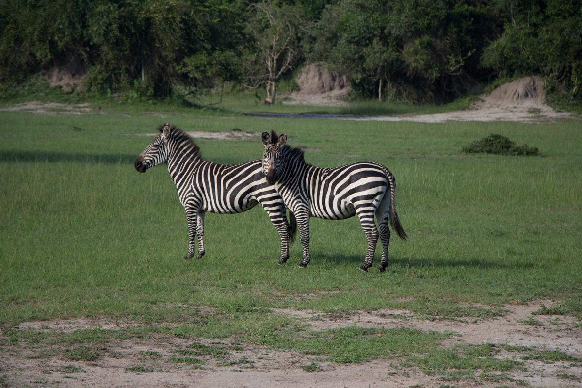 lake-mburo-safari-mit-pferd-86