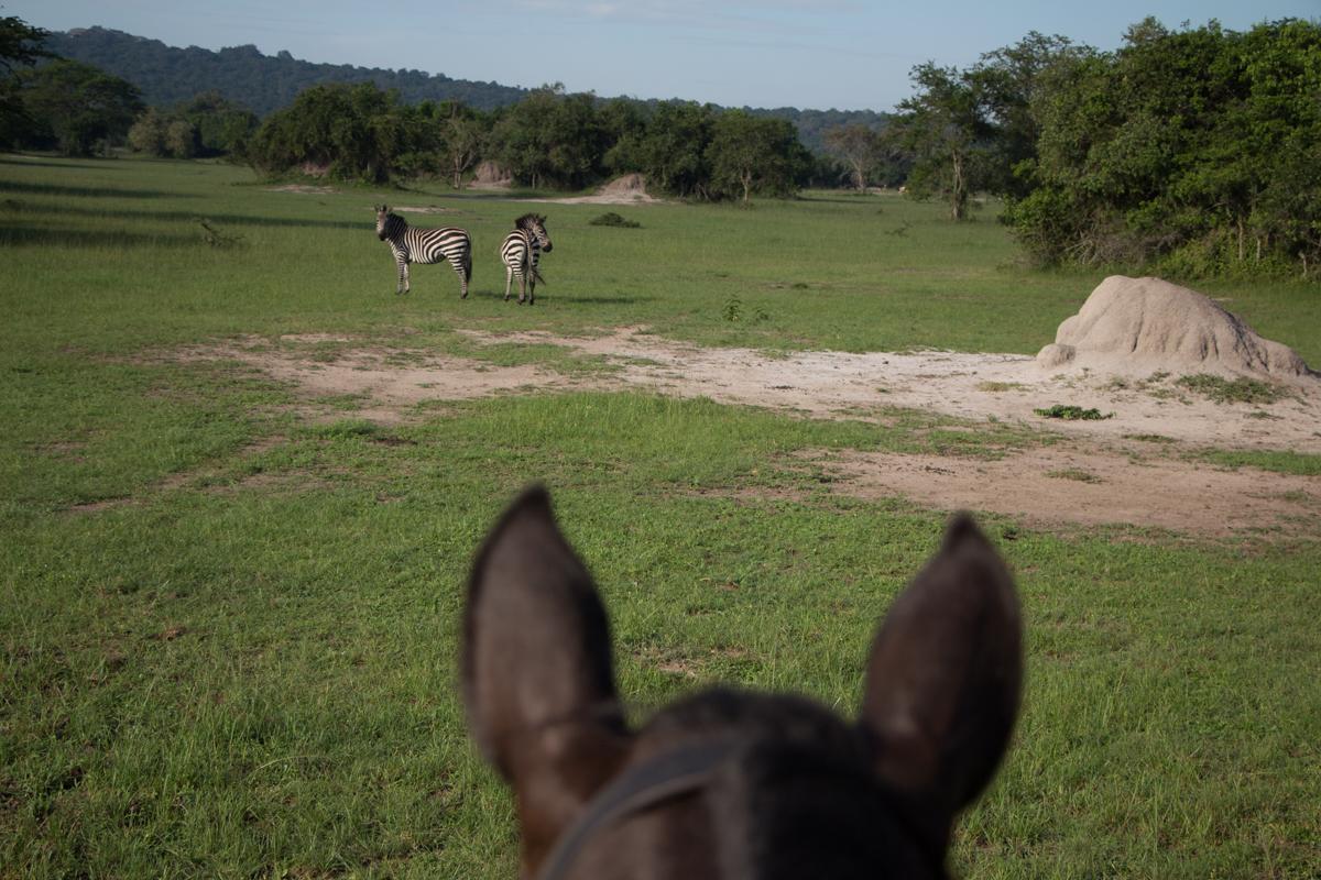 lake-mburo-safari-mit-pferd-88