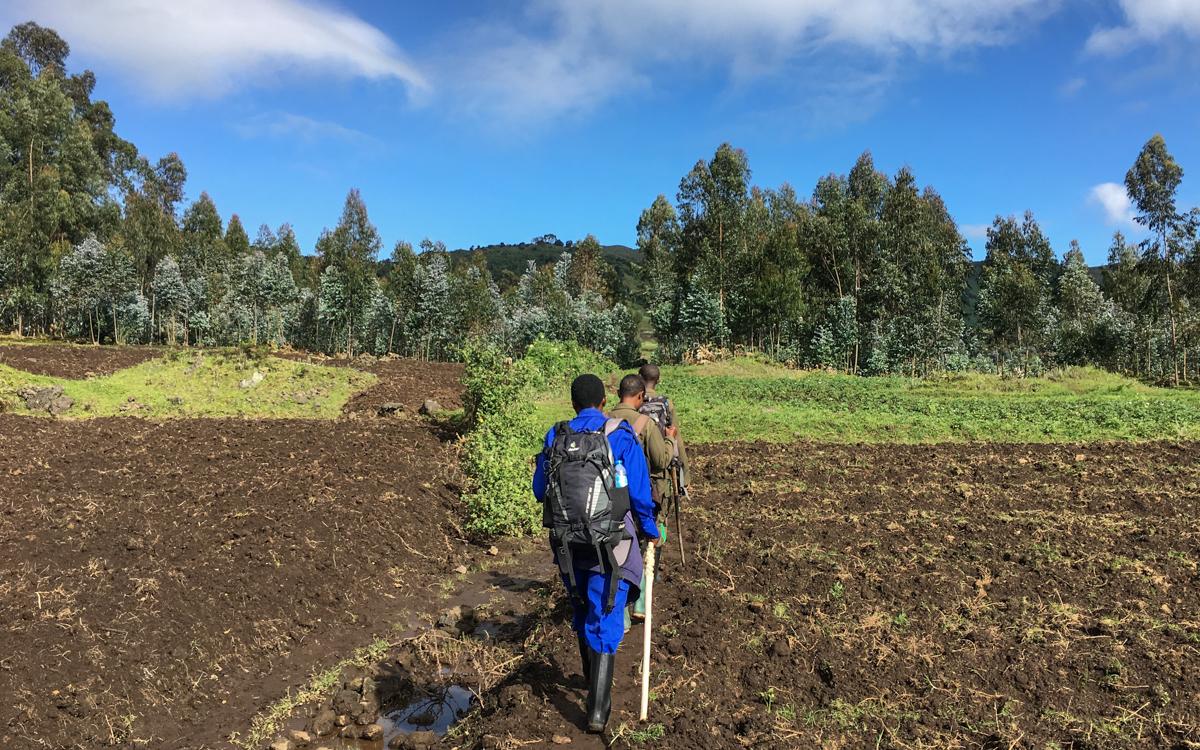 rwanda-gorilla-trekking-volcanoes--sabinyo-15