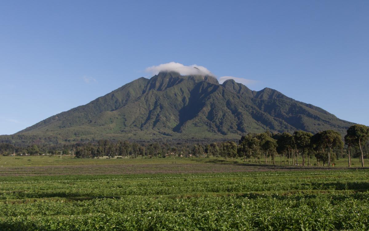rwanda-gorilla-trekking-volcanoes--sabinyo-2