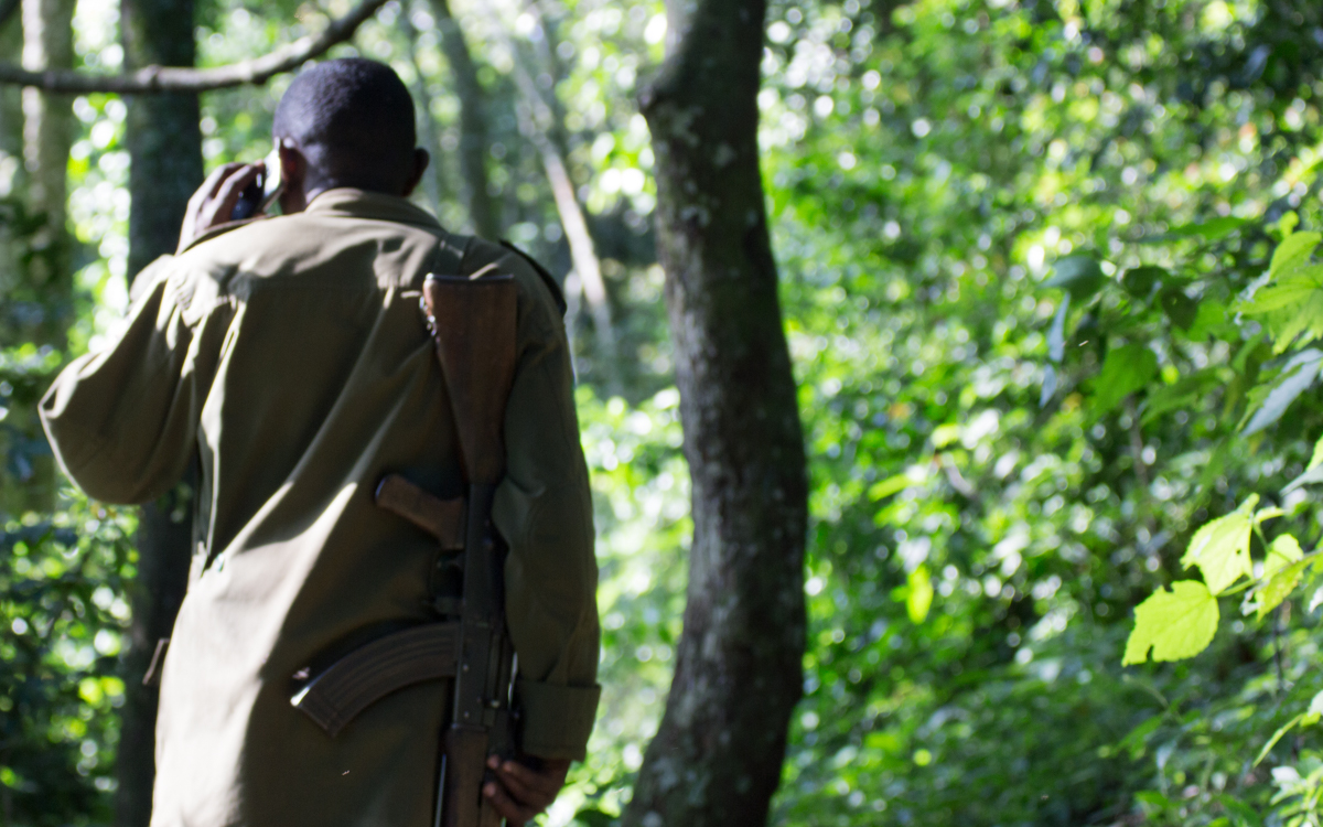 schimpansen-tracking-kyambura-gorge-ranger