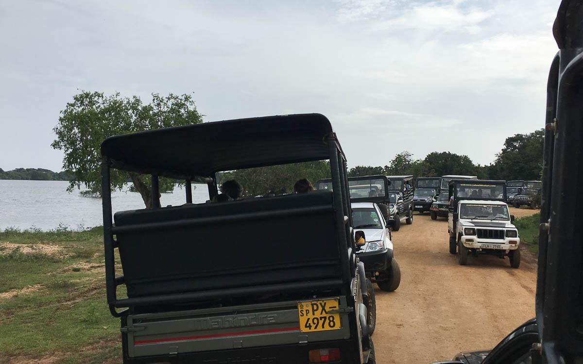Tierschutz in Sri Lanka Yala Nationalpark
