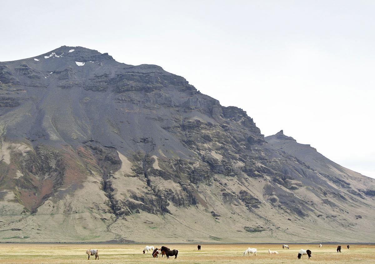 Island Reisetipps: Ponys