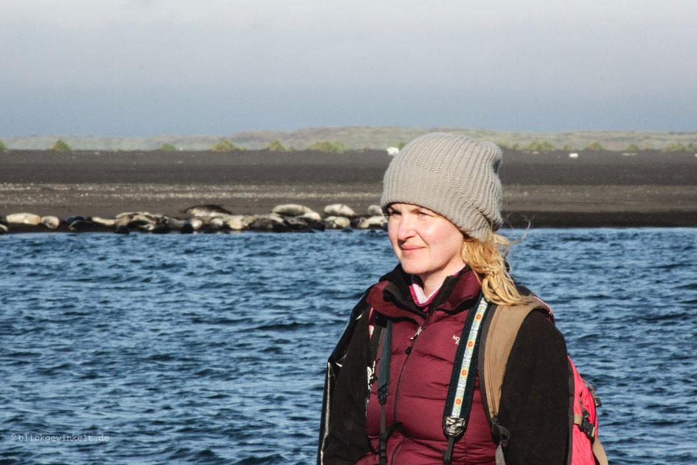 Seehunde beobachen In Island