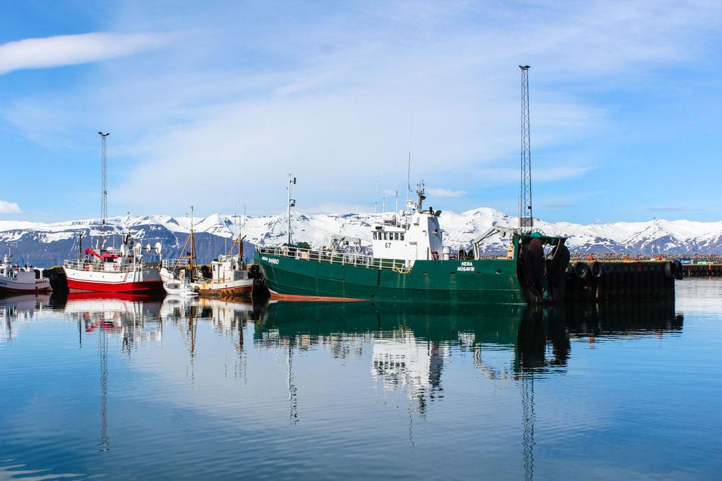 Island Reisetipps:: Wale beobachten in Husavik