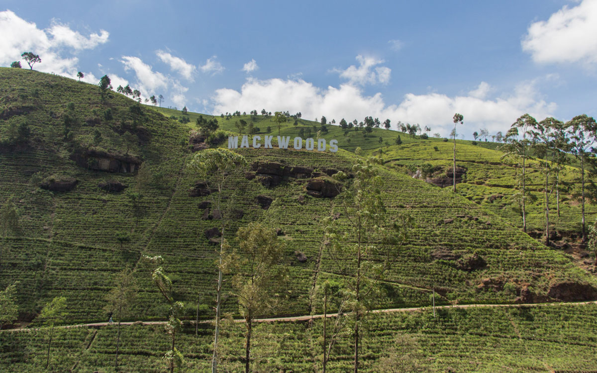 teeplantage-im-hochland-mackwoods-srilanka