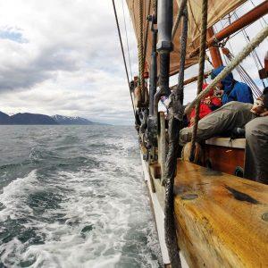 Wale beobachten in Husarvik