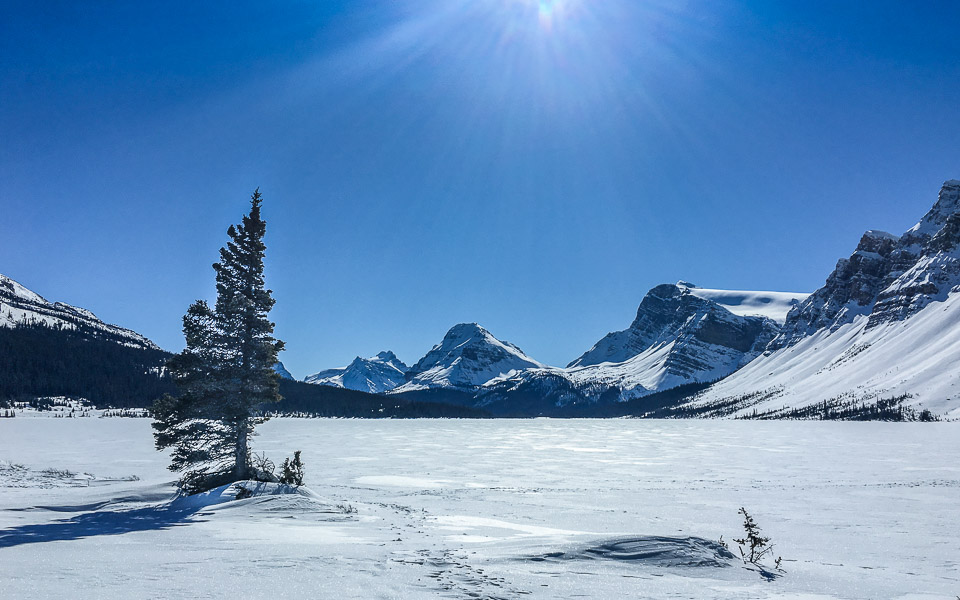 bow-lake-icefields-parkway-winter
