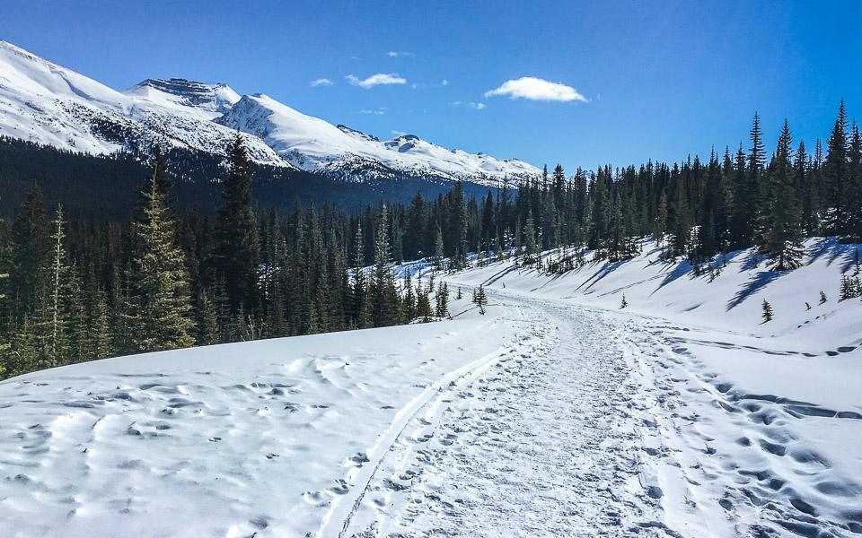 weg-zum-peyto-lake-icefields