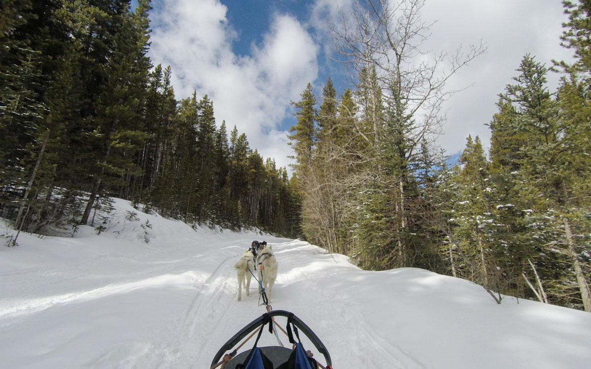 Winter Kanada Rocky Mountains Hundeschlittenfahren Banff