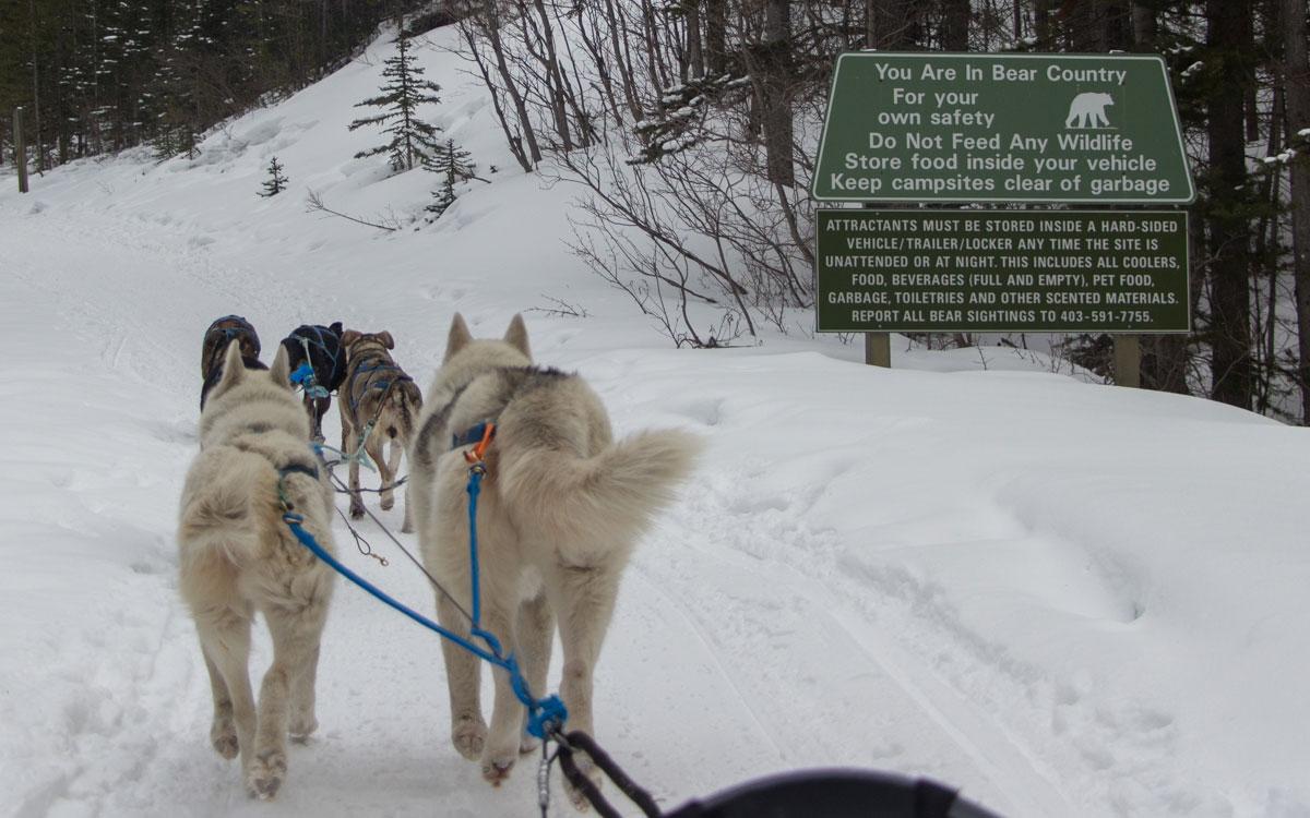 Winter Kanada Rocky Mountains Hundeschlittenfahren Canmore Nationalpark