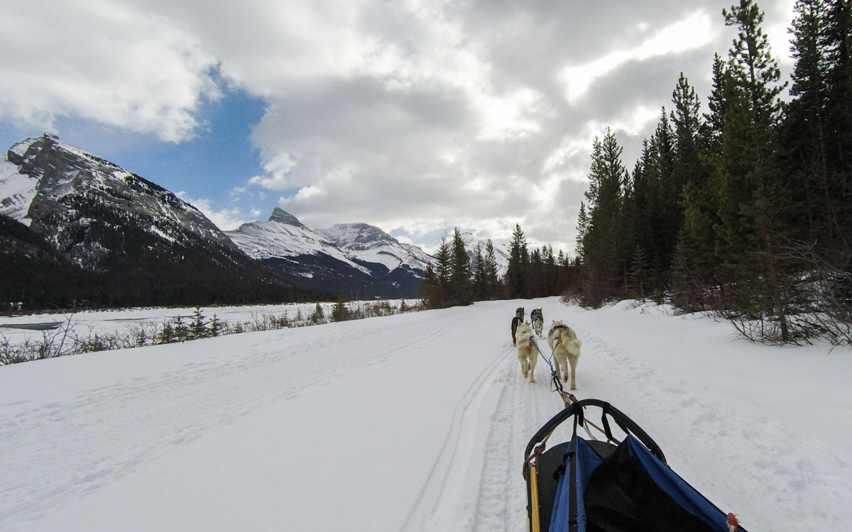 Winter Kanada Rocky Mountains Hundeschlittenfahren in Canmore Spray Lake Provincial Park