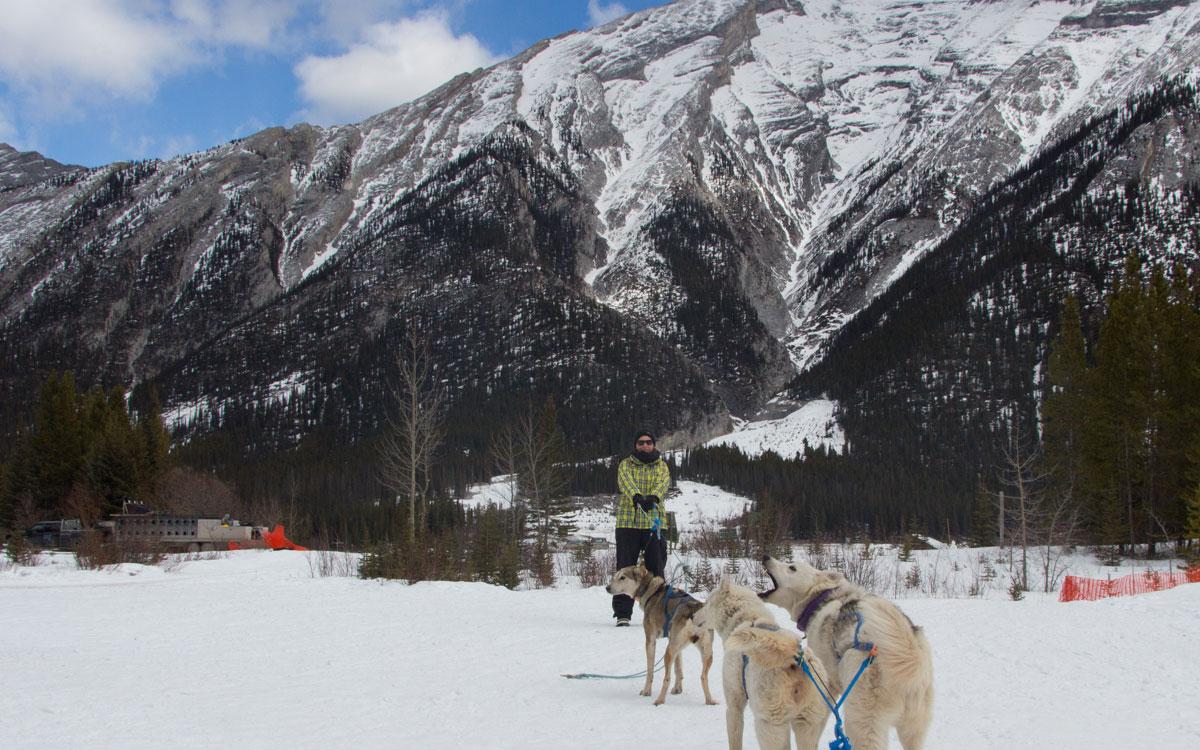 Winter Kanada Rocky Mountains Hundeschlittenfahren Hunde anleinen