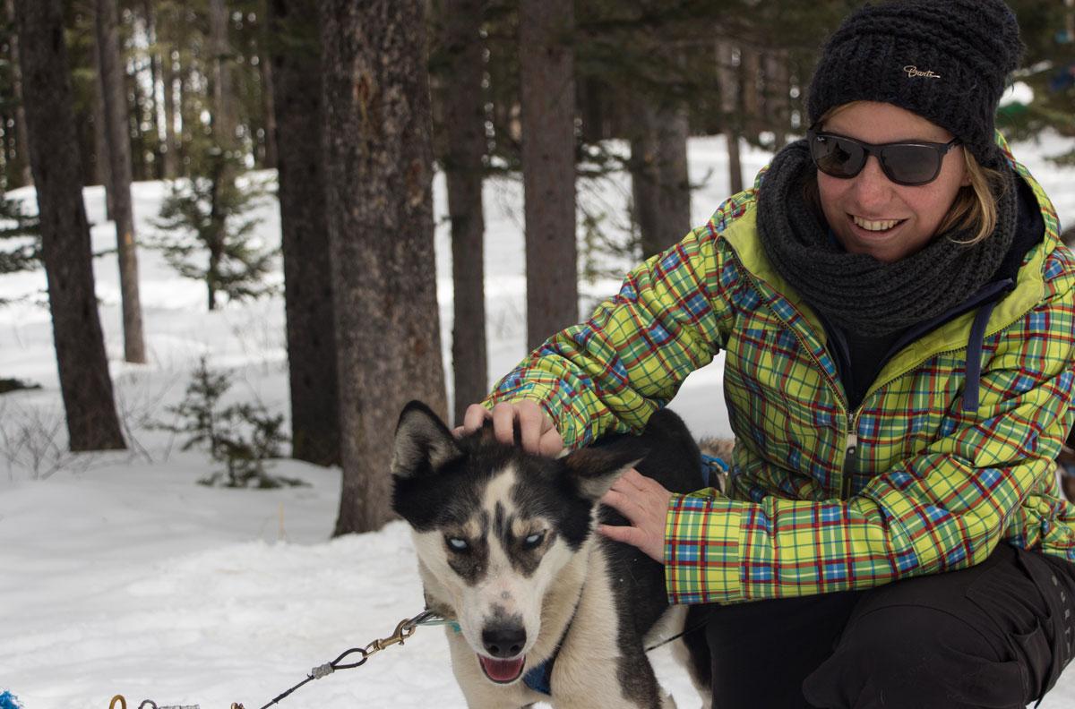Hundeschlittenfahren Winter Kanada Rocky Mountains