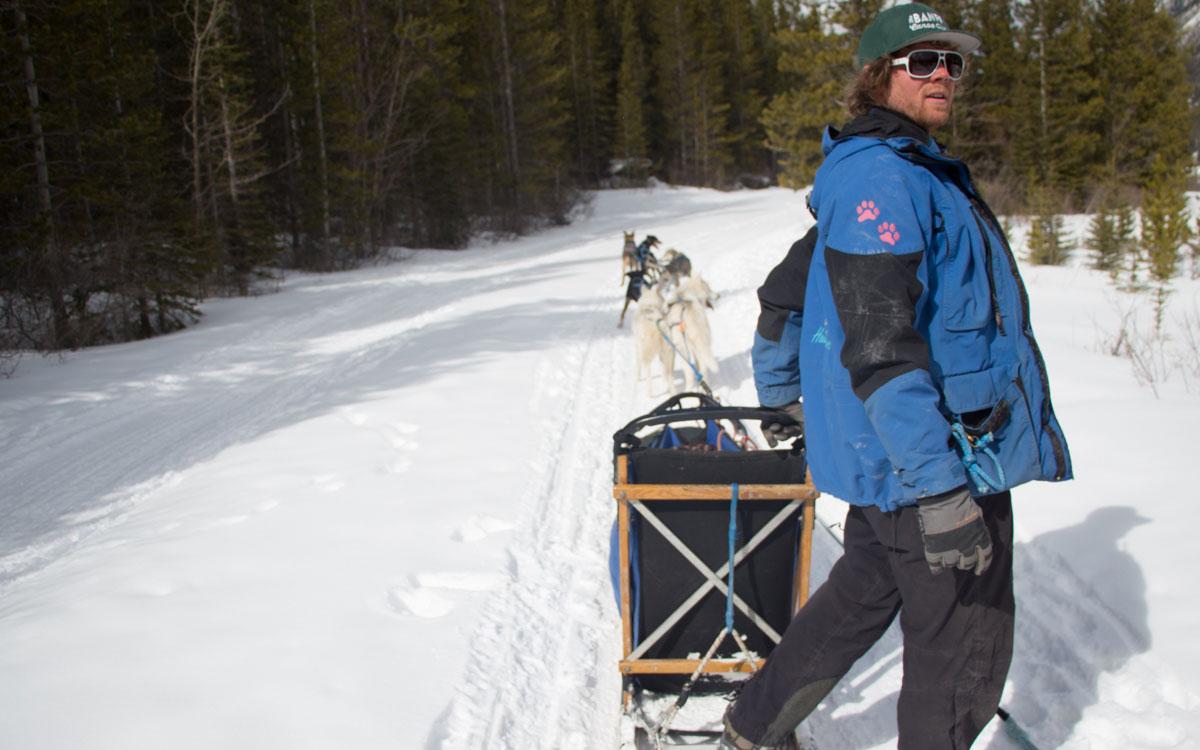Kanada Rocky Mountains Hundeschlittenfahren Musher Teddy Hunde