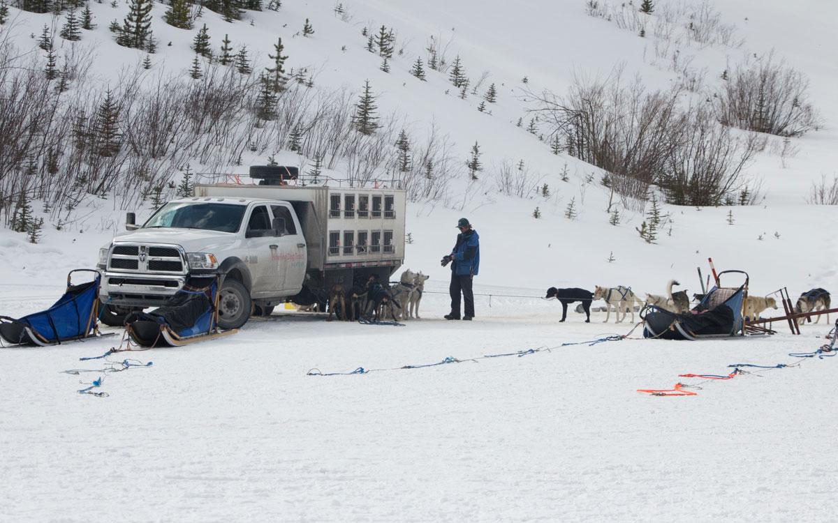 Winter Kanada Rocky Mountains Hundeschlittenfahren