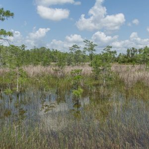 Everglades National Park: Sümpfe bei der Swamp Buggy Tour