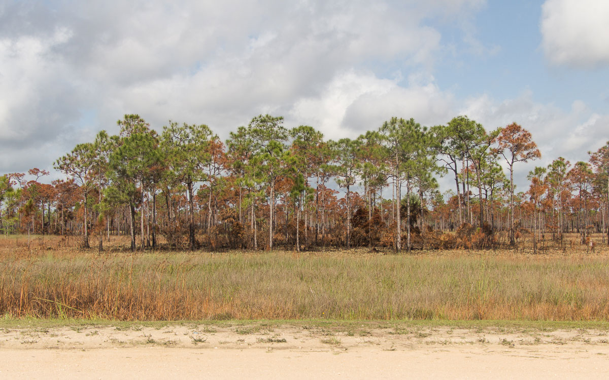 everglades-savanne-big-cypress-national-preserve