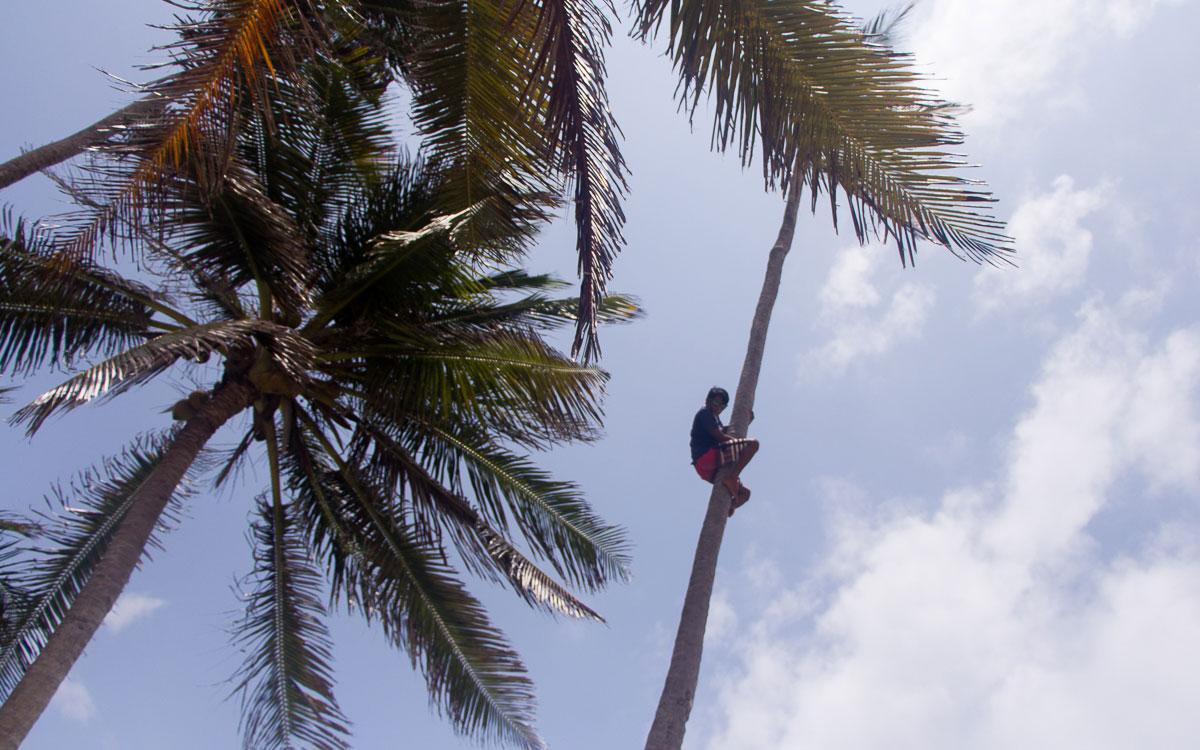frische-kokosnuss-san-blas-inseln