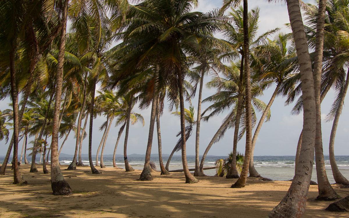 isla-aguja-palmen-san-blas-inseln