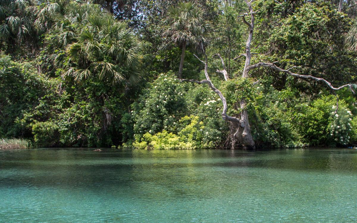 ocala-rainbow-river-kirstallklares-wasser-4