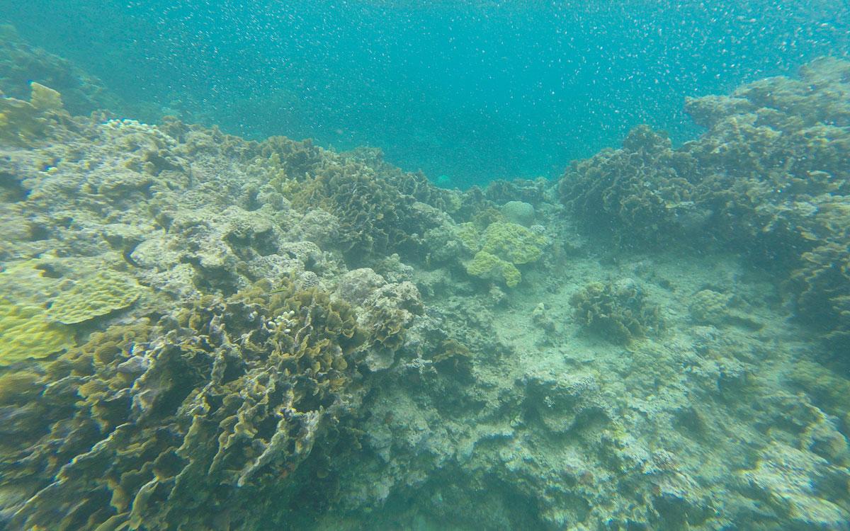 San Blas Inseln Guna Yala Schnorcheln Unterwasserwelt
