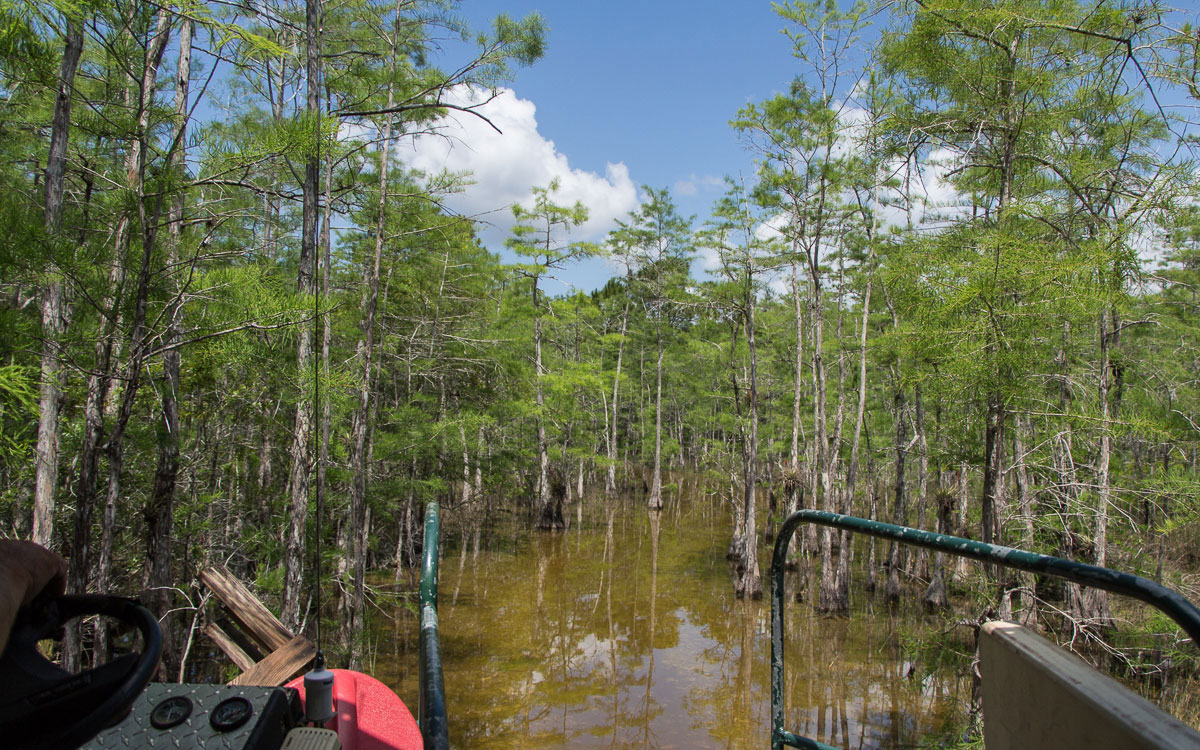 big-cypress-nature-preserve-swampbuggy-5