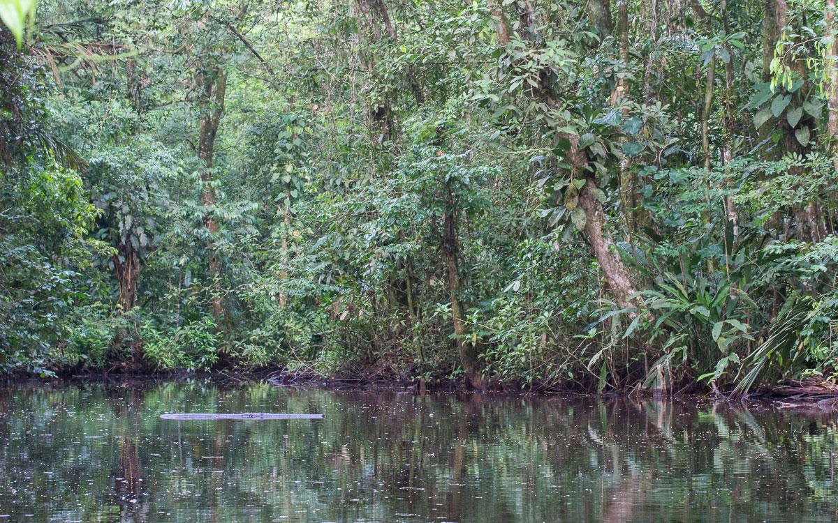 Tortuguero Nationalpark Natur Bootstour Erfahrungen