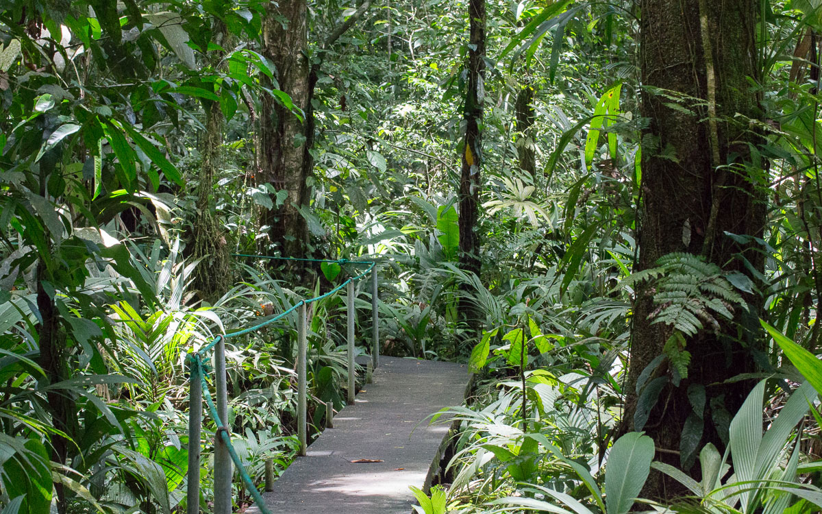 Tortuguero Nationalpark Walking Trail Regenwald