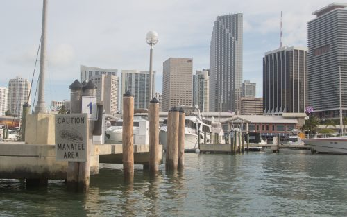 miami-downtown-hafen-manatee-area