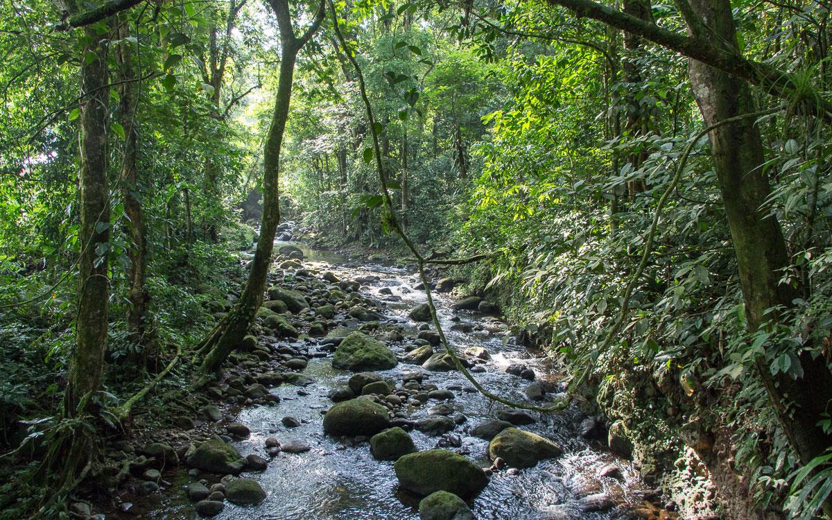 natur-anreise-tortuguero-costarica