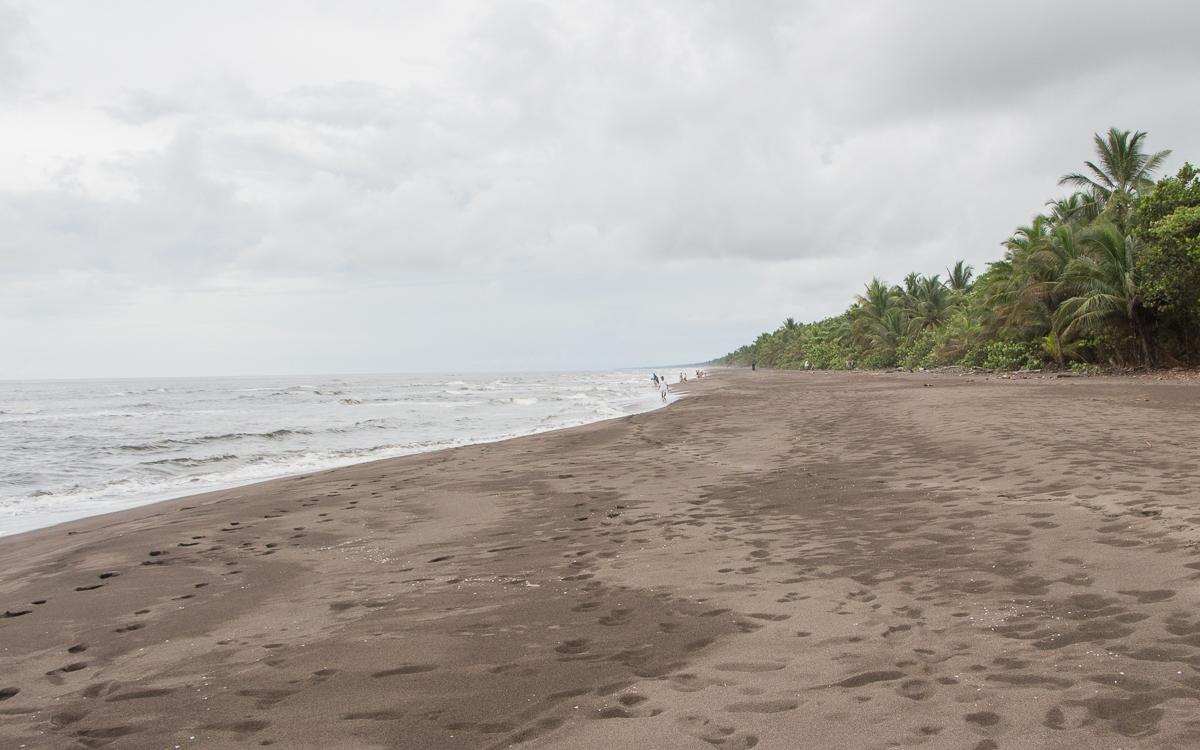 Tortuguero Nationalpark Schldkroetenstrand