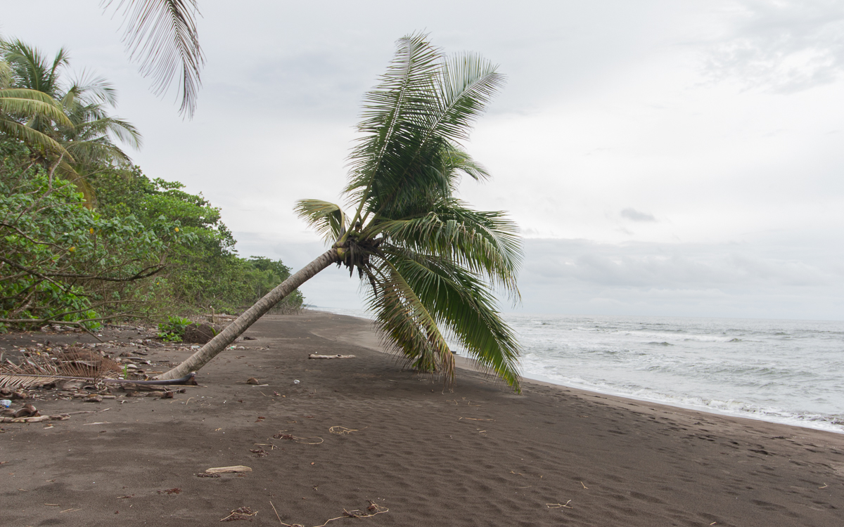 strand-tortuguero-nationalpark