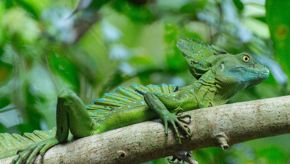 Reisebericht: Alles ¡Pura vida! in Costa Rica