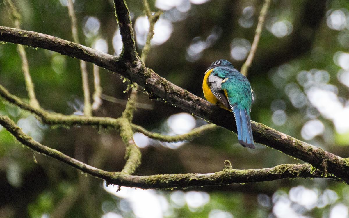 Tortuguero Nationalpark Vögel beobachten