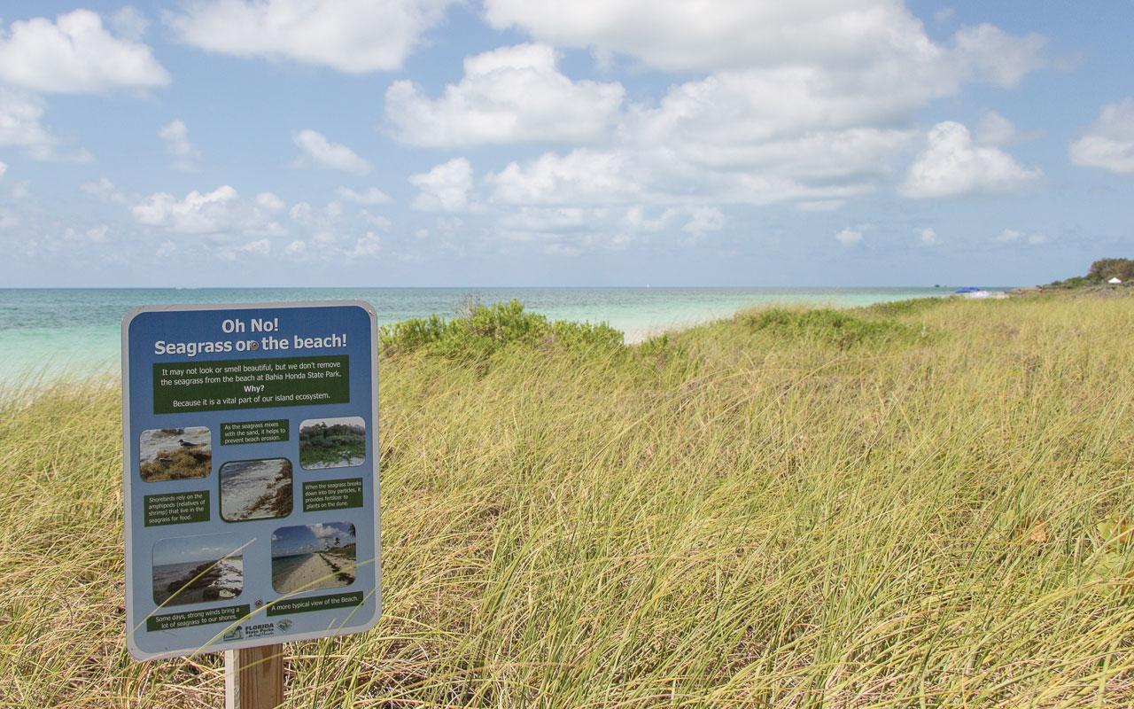Bahia Honda State Park Beach Seegras