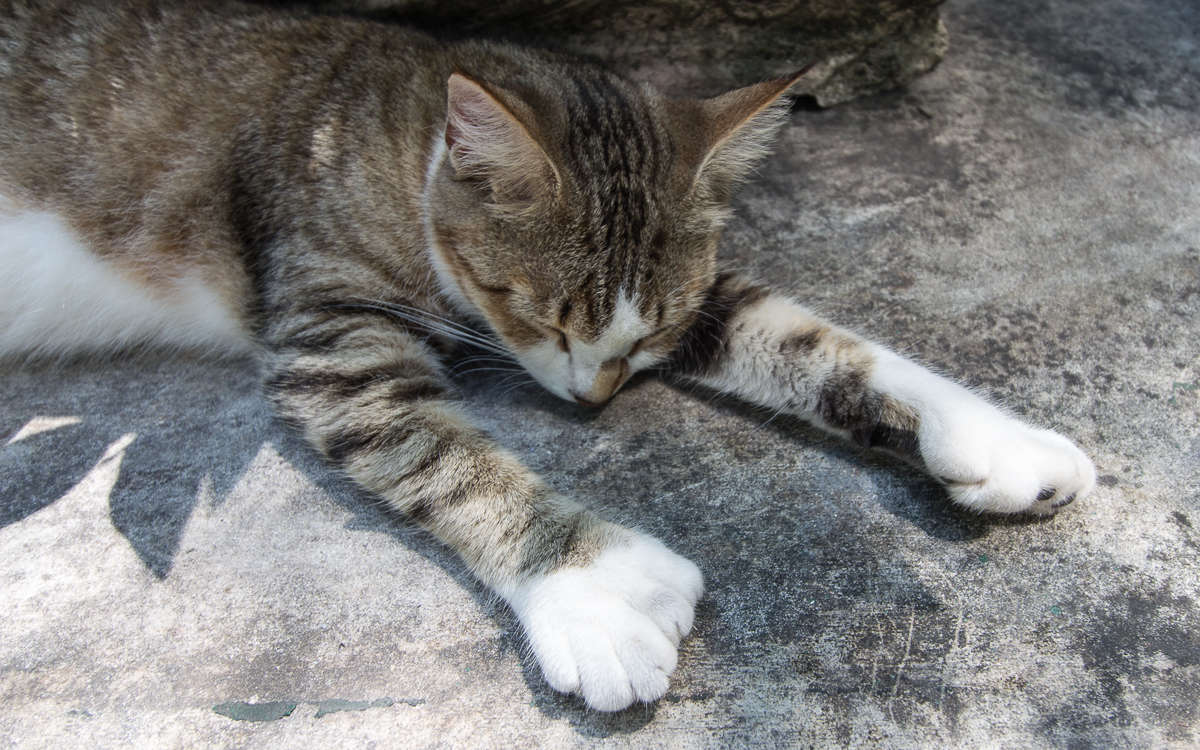 key-west-hemingway-six-toed-cat