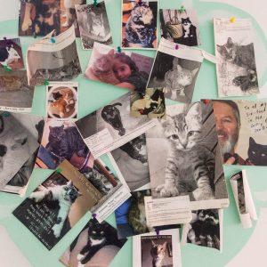 Fotowand im Six Toed Cat Cafe in Key West