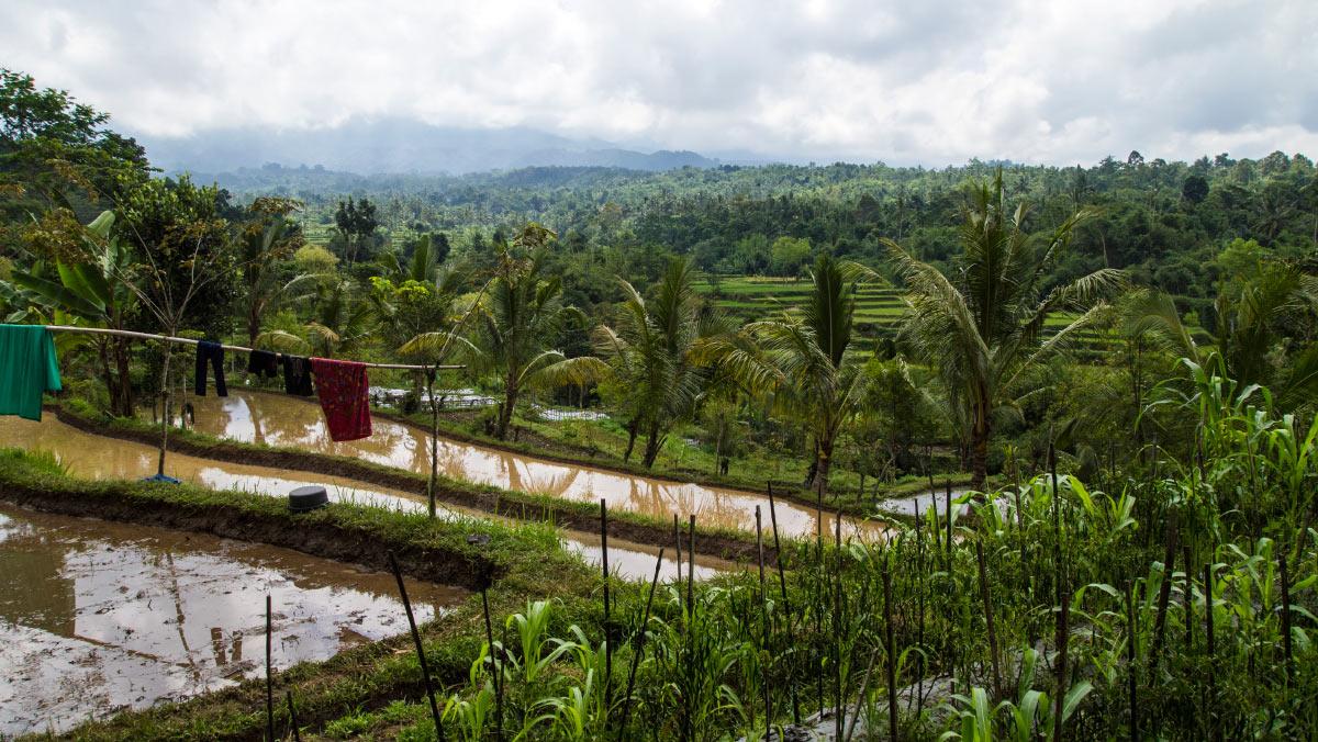 Lombok Indonesien Urlaub Natur Tetebatu