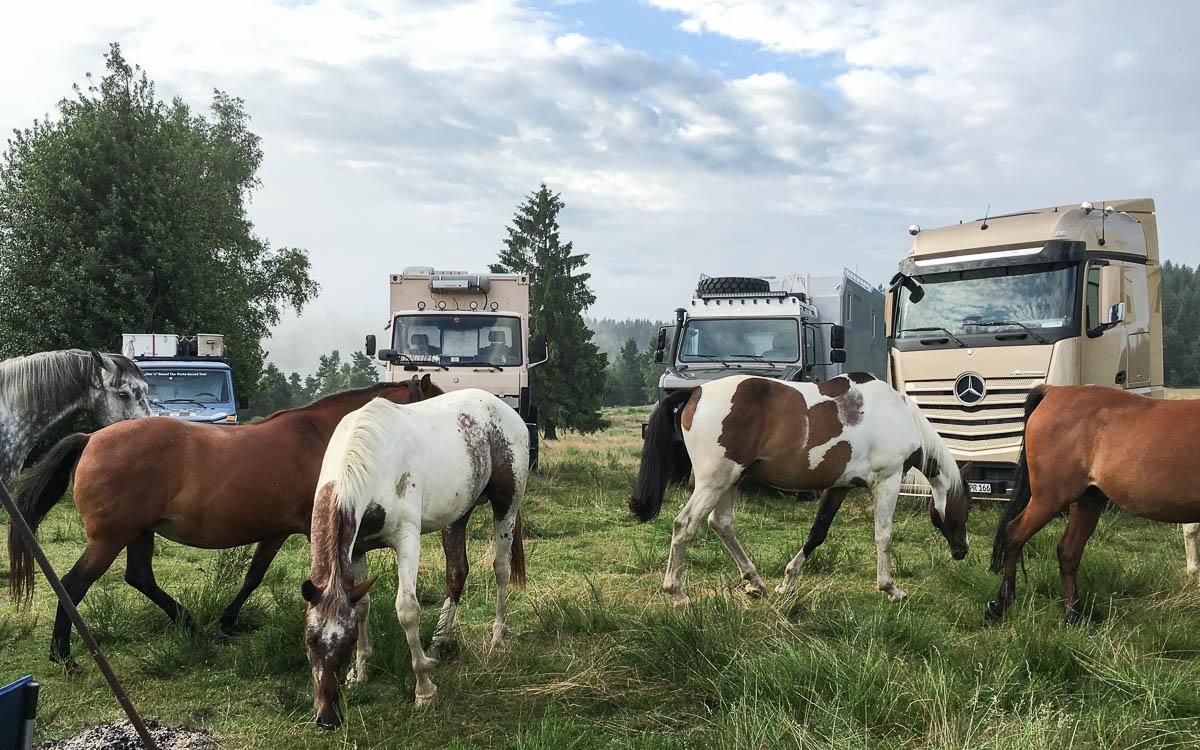 Schwarzwald Abenteuer Mercedes-Benz Pferde